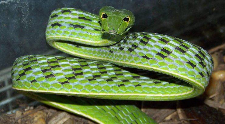 Depredadores de las serpientes