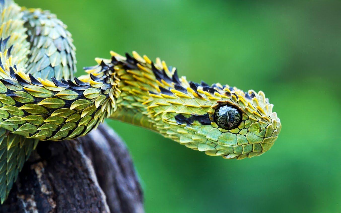 Galerías de imágenes de Info Serpientes