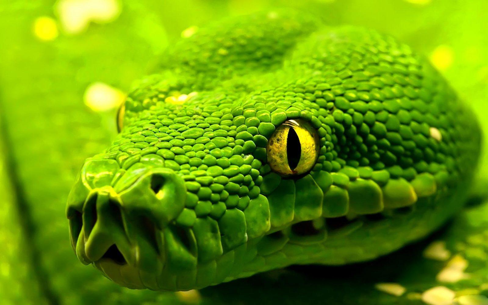 Imágenes de serpientes 3D :: Imágenes y fotos