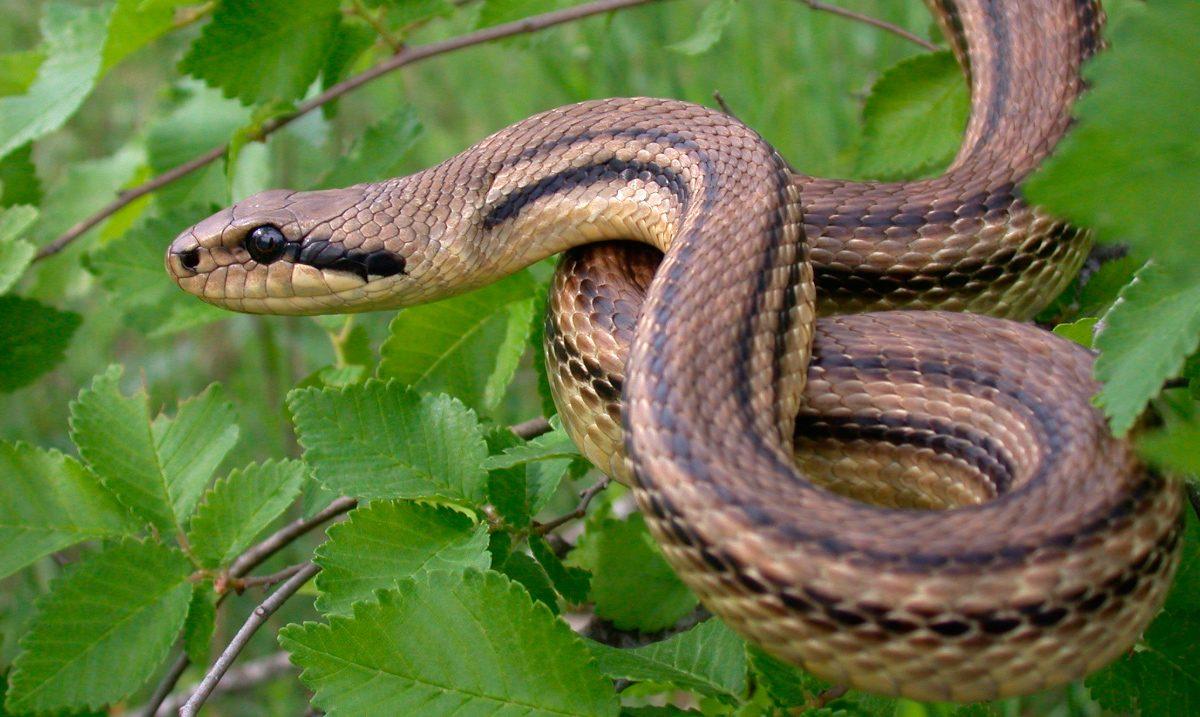 Resultado de imagen de serpiente
