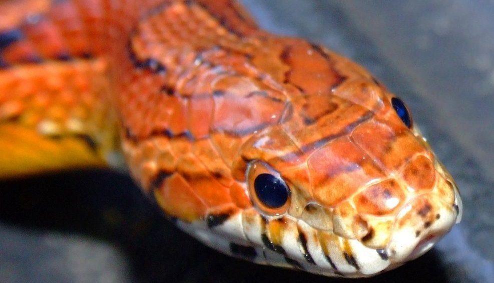 фото змеи рыже черная обмотать бутылку проволокой