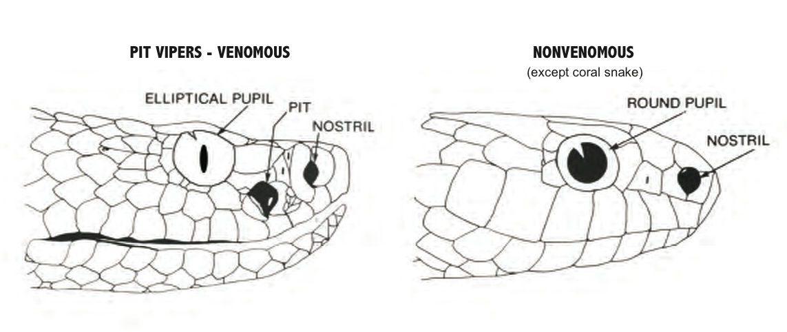 Visión térmica de las serpientes :: Imágenes y fotos